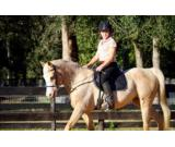 Selling my 7 year old Palomino gelding