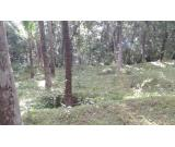 33 Cents of land for sale at Koothuparambu near Kannur airport