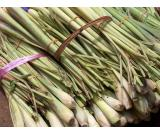 100-LEMON-GRASS-HERB-SEEDS-Cymbopogon-citratus for sale