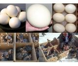 Hand Tamed Parrots And Fertile Eggs for Sale.