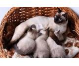 Lovely Savannah kittens for adoption tеxt.