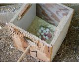 African Congo Grey Parrot Fertile Eggs on sale