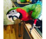 lovely and adorable macaw parrots for rehoming