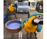 fertile parrots and parrot eggs availble at moderate prices.