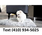 Amazing tiny t-cup pomeranian puppies for sale!!!!