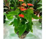Indoor and outdoor plants and furnitures text 302 526 0704